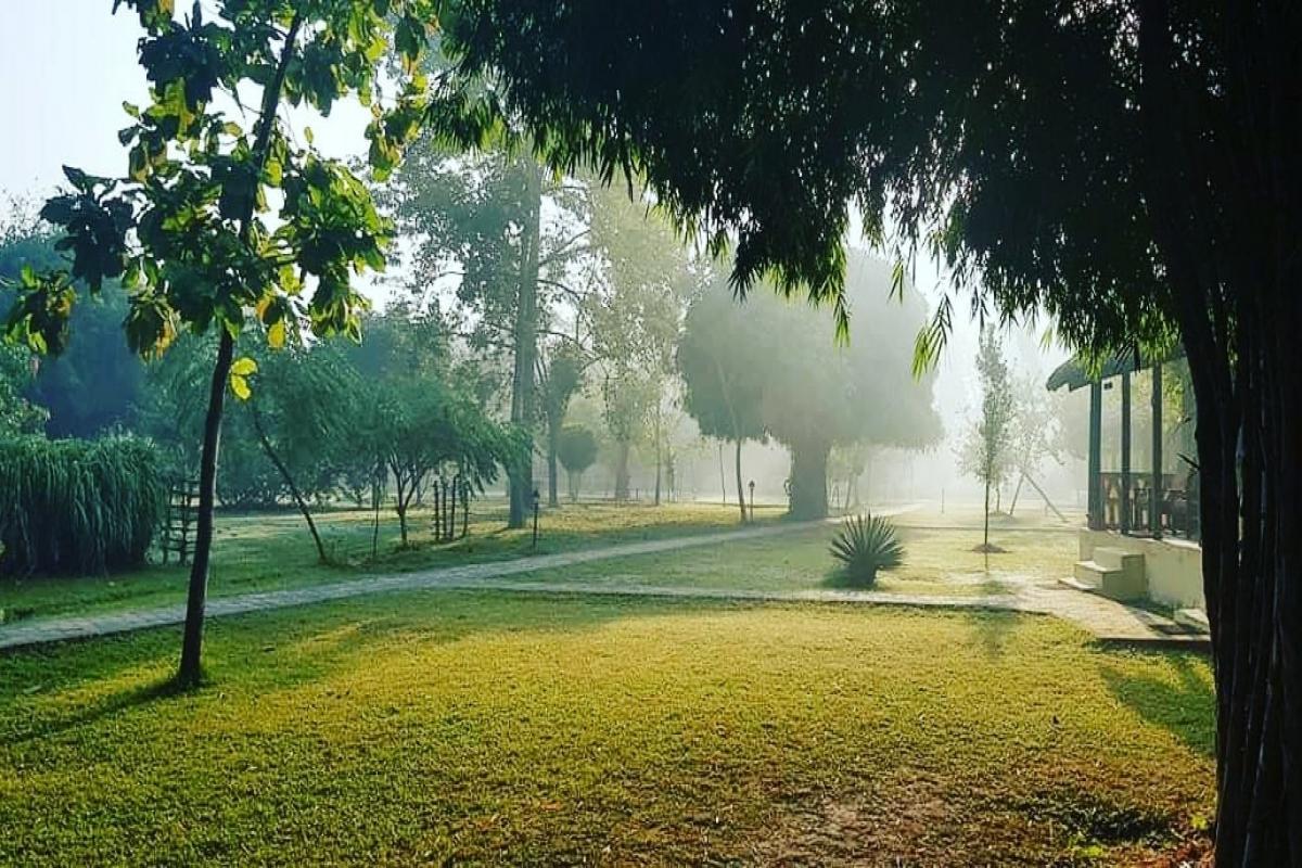 In the mist - Lumbini Buddha Garden